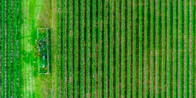 Monitores de siembra: ¿Para qué sirve esta tecnología agrícola?